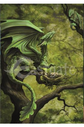 Forest Dragon Card (AN75)