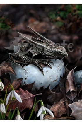 The Hatchling by Anne Stokes (ART29)